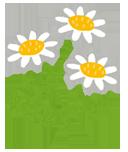 flower_chamomile3